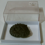 AMMONITE nice black specimen 2.5 inch in case LC-20 @sold@